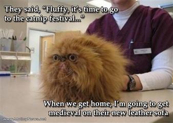 Fluffy.....