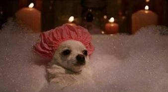 Puppy Bath !!