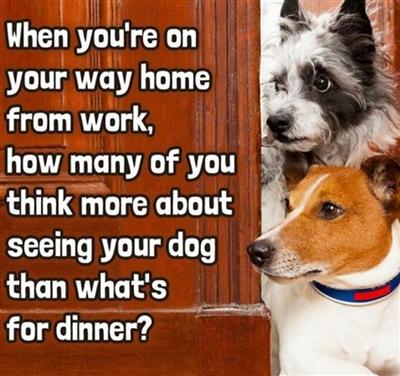 Dog !!