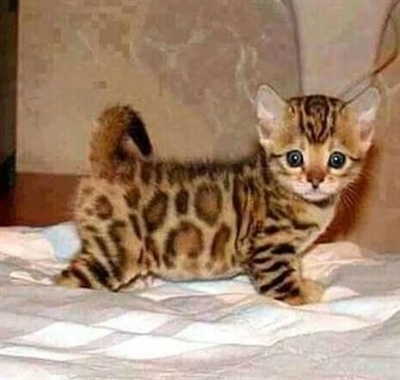 Kitty !!!!
