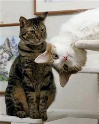 Cats !!