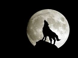 Lonewolf_1141