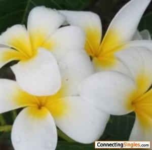 floraiflorai
