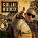 collie buddz: mamacita