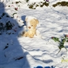 Teddy in the snow Puzzle