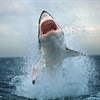 Air Jaws 20 Foot Great White Puzzle