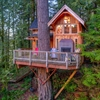 They Live In This Tree House Puzzle