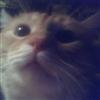 My Cat Tiger ( AKA PUSS N BOOTS)