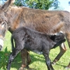 cute donkeys try this