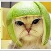 meow--03