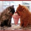 Cute Cats & Ice-cream