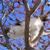 puss in tree