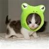 funny CAT 002
