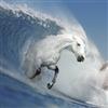 galopping waves