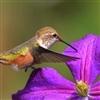 Sweet Nectar Puzzle