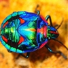 Colourful beetle 2