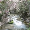 Algar Falls.......