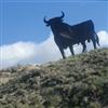 Black Bull....