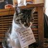 Sorry Pussycat