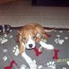 Jacko-Pup