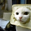 In-Bred (Bread) Cat