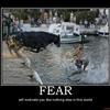 Fear of Bull