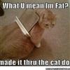 Fat Cat......