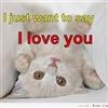 Love Kitten....