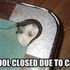 Pool cat....