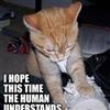 Artsy Cat....