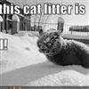 Cold litter box....