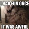 Awful Fun Cat