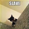 Bossy Cat.....