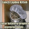 Lunch-lady Cat.....
