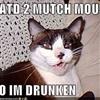 Drunk Cat.....
