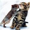 Squirrel kissed