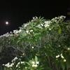 night time blues :)