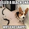 Black Snake....