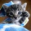 Hi 5 Kitten