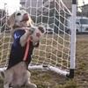 Puppy Soccer