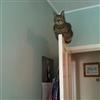 Planking Kitty 2