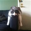'Planking' Kitty 6