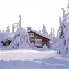 Swedish vinter