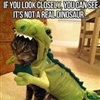 Cats Disguise