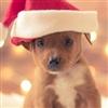 Santa Puppy !!