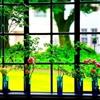 Window Puzzle