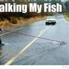 walking-my-fish