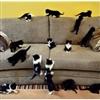 Kitties Puzzle
