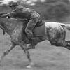 Last Horse Cavalry???