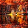 Silence in Fall Puzzle